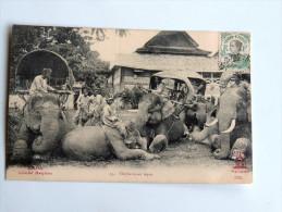 Carte Postale Ancienne : LAOS : Elephants Au Repos - Laos