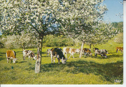 Cpsm NORMANDIE - Vaches Dans Le Pré Sous Les Pommiers En Fleurs - D19 159 - Postcards