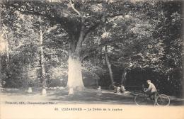 VAL D'OISE 95  LUZARCHES  CHENE DE LA JUSTICE  ARBRE - Luzarches
