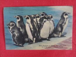 Penguins  Miami Rare Bird Farm  Fl Linen  Not Mailed Ref 1211 - Animals
