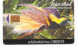 Hungary - Paradicsommadar - Paradiesvogel - Vogel - Bird - Hungary
