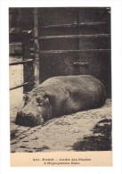 Paris: Jardin Des Plantes, L´ Hippopotame Kako (14-929) - Arrondissement: 05