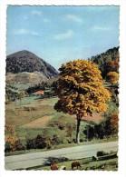 88 Les Vosges Pittoresques Pâturages Au Col De Bussang Troupeau De Moutons - Bussang