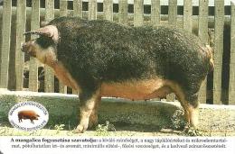 PIG * MANGALITZA * MANGALITSA * ANIMAL * DEBRECEN * ASSOCIATION OF MANGALICA BREEDERS * CALENDAR * MOE 2009 2 * Hungary - Calendari