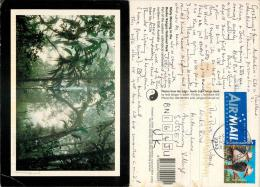 Border Ranges National Park, NSW, Australia Postcard Posted 2001 Stamp - Australie