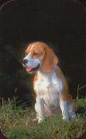 DOG * DOGGIE * ANIMAL * CALENDAR * Horeftosz 2001-2002 19 * Hungary - Calendars