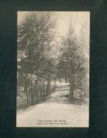 USA - New York Botanical Garden - Bronx Park - Path Trough The Woods ( The Alberttype Co) - Bronx