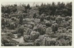 Lemelerberg - Natuurschoon Juniperus (AAM-375 - Pays-Bas