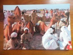 Bahrain Camel - Emirats Arabes Unis