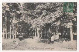 HONFLEUR - Sous Bois Sur Le Plateau De Grâce - Honfleur