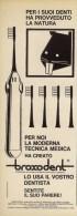 # SPAZZOLINO BROXODENT PIERREL 1950s Advert Pubblicità Publicitè Reklame Toothbrush Zahnburst Oral Dental Healthcare - Attrezzature Mediche E Dentistiche