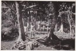 RP: Tahitian Native Boys Walking Amoung Trees, Tahiti, 10-20s - Tahiti
