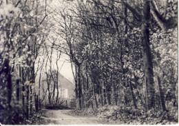 Vosselaar Beeldekensberg (nu: Galgeneindse Pad ) - Vosselaar