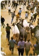 CALENDARIO DEL AÑO 1981 DE UNOS TOROS (CALENDRIER-CALENDAR) TORO-BULL - Calendarios