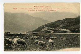 009 - LABOUCHE - PYRENEES 3° - 1003 - Troupeau Au Port D'  ENVALIRA - Andorra