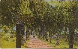 Palm Walk - Tampa Bay Hotel Grounds - Tampa, Florida - Tampa