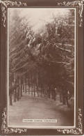 1900 CIRCA - LADYBRAND LILYHOEK AVENUE - Afrique Du Sud