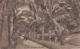 1900 CIRCA - DURBAN IN THE GARDEN - Afrique Du Sud