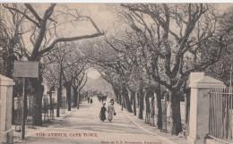 1900 CIRCA - CAPE TOWN - THE AVENUE - Afrique Du Sud
