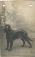 Chien Nommé Carte Photo  Gypsy De Montieres Par Kreick Ruber Et Dora D' Amiens Chasse Setter - Perros