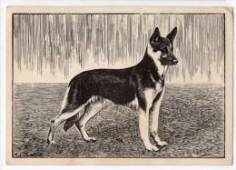 German Shepherd Dog CR Artist Signed Carte Postale Vintage Original Postcard Cpa Ak (W3_3015) - Perros