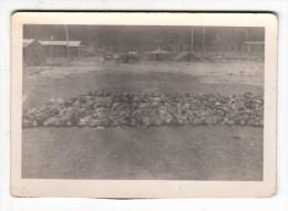 Militaria - Photo Originale - Camp De Concentration De  Dachau à La Libération - Format 9 X 6.5 Cm - Guerre, Militaire