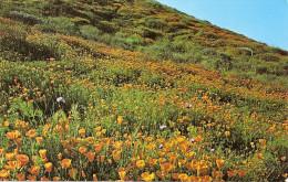 CALIFORNIA- LOS ANGELES:  POSTCARD CALIFORNIA POPPIES. HERMOSA POSTAL CON UN CAMPO DE CRISANTEMOS.GECKO.