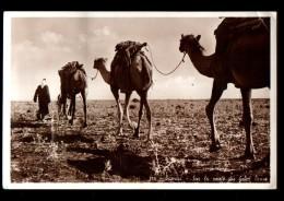 SYRIE Damas, Types, Sur La Route Du Gebel Druse, Chameaux, Dromadaires, Ed Fotocelere 775, CPSM 9x14, 1939 - Siria