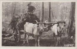40-AU PAYS GASCON-Attelage De Boeufs Animé 1949 - Autres Communes