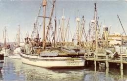 CALIFORNIA-SAN FRANCISCO:  POSTCARD FISHERMAN'S WHARF. AN INTERESTING VIEW SEEN MOST ANY DAY AT FISHERMAN'S. GECKO. - San Francisco