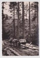 (RECTO / VERSO) FORET DE VIZZAVONA EN 1957 - CHEMIN DES PONTS - N° I.B. 275 - LEGER PLIS D' ANGLE EN HAUT A DROITE - France