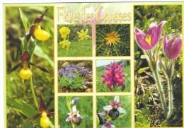 Flore Des Causses. Sabot De Venus, Onosma Fastigiée, Cardabelle, Violette Odorante, Orchis, Anémone Pulsatille - Fleurs, Plantes & Arbres
