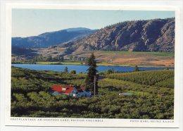 CANADA - AK 192550 British Columbia - Obstplantage Am Osoyoos Lake - Other