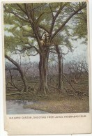 Vintage Postcard (Undivided Back), H.E. Lord Curzon, Shooting From Juhla. Hyderabad Tour, India (ref.# 2875se) - Inde