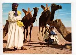 CP 10*15/BB102/MAROC HOMMES BLEUS ET LEUR MEHARA - Maroc