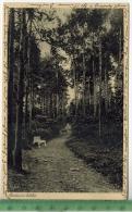 Zobten Am Berg, Exerzitienhaus St. Ignatius 1935Partie Im WaldeVerlag: Kettling & Krüger, Schalksmühle, POST KARTEmi - Schlesien