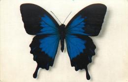 PAPILLON - Vlinders
