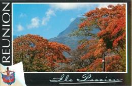 CPSM Ile De La Réunion-Flamboyants-Rivière Des Pluies   L1563 - Saint Benoît