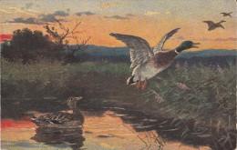 Jagd Hunting  Chasse   Canard Enten  Oiseaux  Geflugel  Illustrateur  Old Cpa. - Hunting