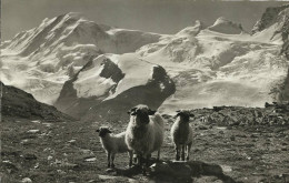 PostkaartZwitserland  206    Auf Rotenboden Ob Zermatt - Ohne Zuordnung