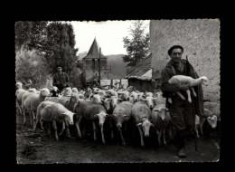 65 - GOUAUX-DE-LARBOUST - Les Agudes - Moutons - France