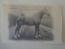 CPA  CHEVAL  VOLTIGEUR BAI BRUN NE EN 1899 - Chevaux