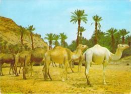 Afrique > Algérie ( Scènes & Types ) Halte Dans L'Oasis   -timbre Stamp ALGERIE *PRIX FIXE - Scènes & Types