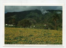 SPAIN  - AK 193105 La Palma - Insellandschaft Auf La Palma - La Palma