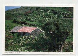 SPAIN  - AK 193110 La Palma - Bei Garafía - La Palma
