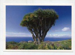 SPAIN  - AK 193113 La Palma - Kanarischer Drachenbaum - La Palma