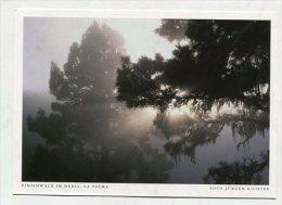 SPAIN  - AK 193114 La Palma - Pinienwald Im Nebel - La Palma