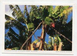 SPAIN  - AK 193115 La Palma - Bananenstauden In Puerto Naos - La Palma