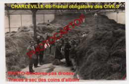 RECOLTE-Travail Obligatoire-Civils-Foin-Fourrage-CHARLEVILLE-!!-Photo Allemande-Guerre14-18-1WK-Militaria-France-08- - Charleville