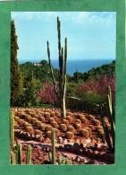 """Blanes -Sta Cristina Lloret De Mar Jardin Botanico Tropical  """"Pinya De Rosa"""" Costa Brava (Girona - Cataluna) - Espagne"""